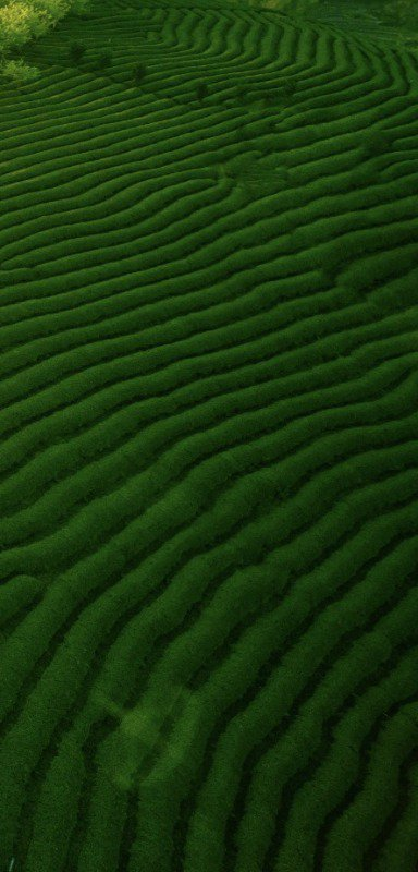 Waves of green...